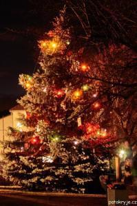 Rozsvícený strom