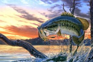 Dobrá zpráva pro rybáře