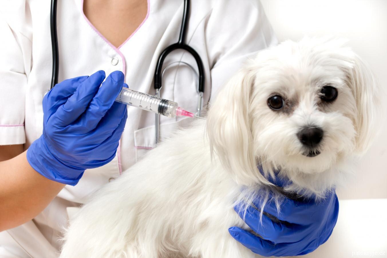 Očkování psů 2020