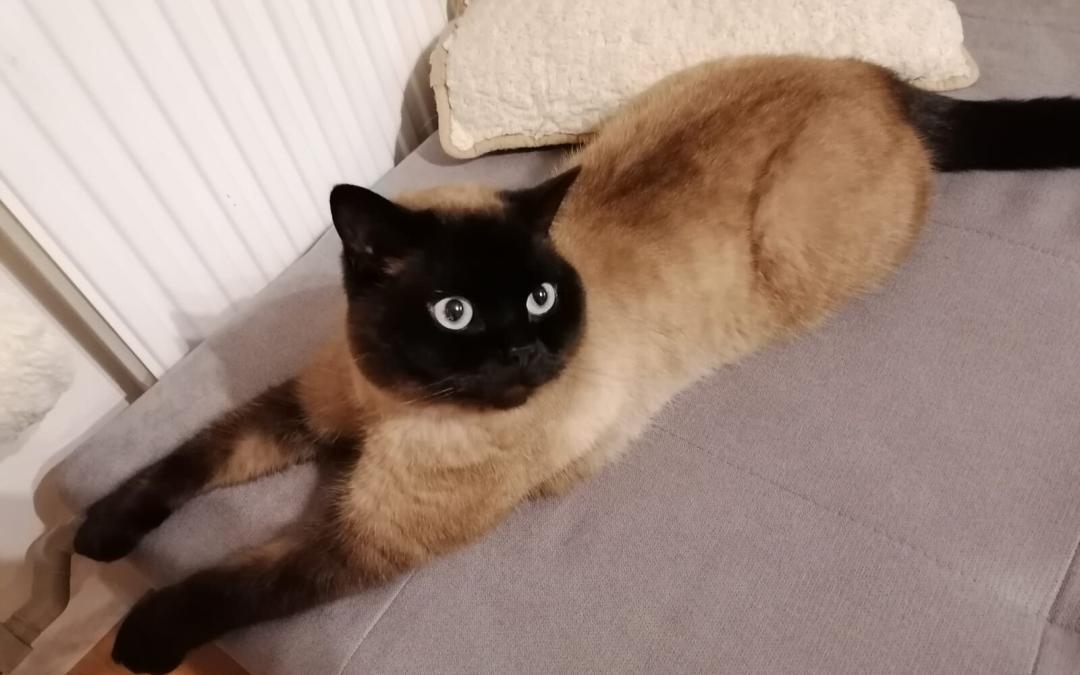 Ztratila se kočka